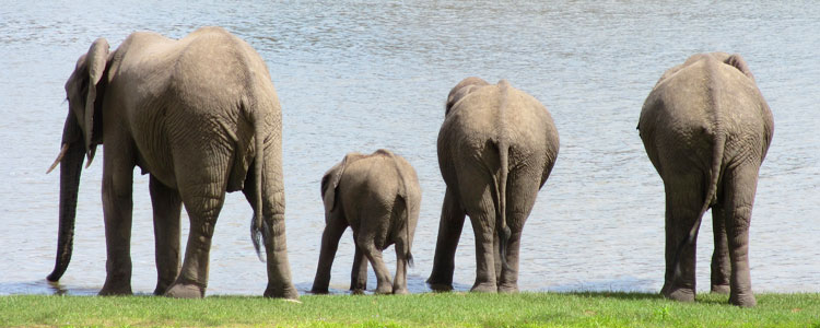 Tanzania 2013 – Selous game reserve