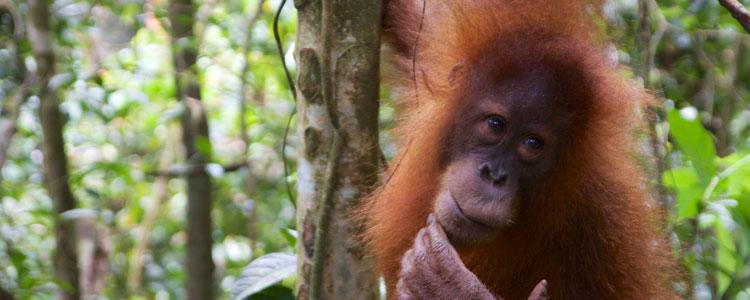 Indonesia 2013 – Sumatra